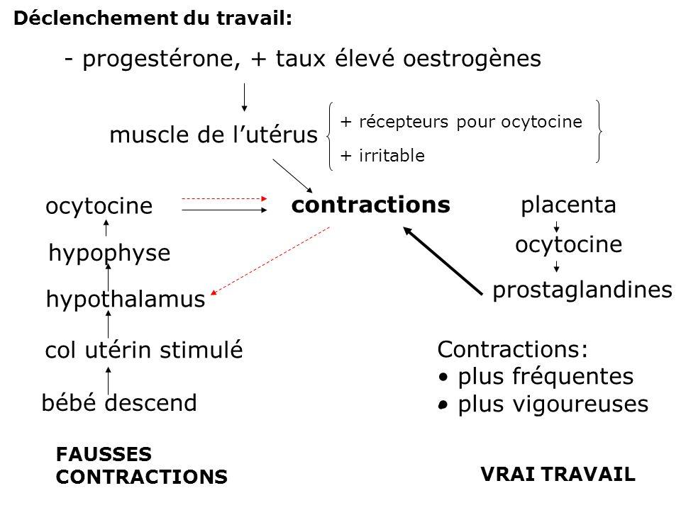 - progestérone, + taux élevé oestrogènes muscle de l'utérus + récepteurs pour ocytocine + irritable contractions bébé descend col utérin stimulé hypot