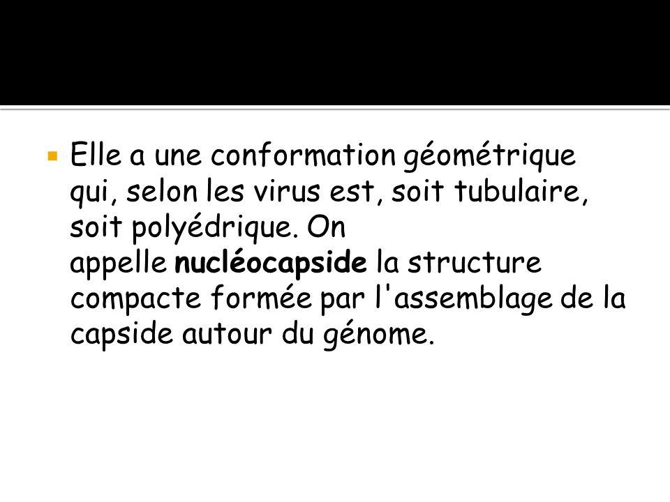  Elle a une conformation géométrique qui, selon les virus est, soit tubulaire, soit polyédrique. On appelle nucléocapside la structure compacte formé