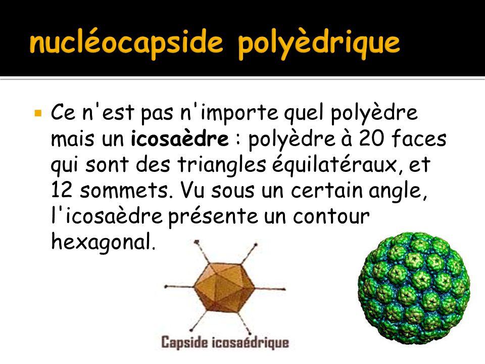  Ce n'est pas n'importe quel polyèdre mais un icosaèdre : polyèdre à 20 faces qui sont des triangles équilatéraux, et 12 sommets. Vu sous un certain