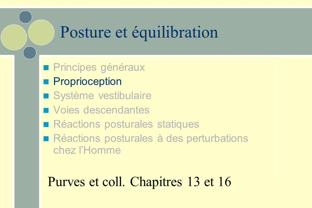 En conclusion… Contrôle de la posture Consiste en la capacité: –d'ajuster les différents segments entre eux –d'ajuster la position du corps en fonctio
