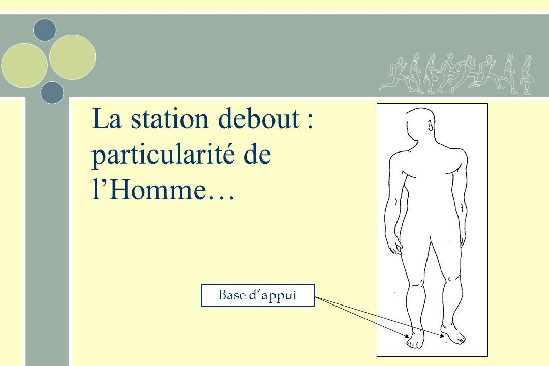Posture et équilibre chez l'Homme D'après les travaux d'Eadweard Muybridge (1830-1904). Fusionman