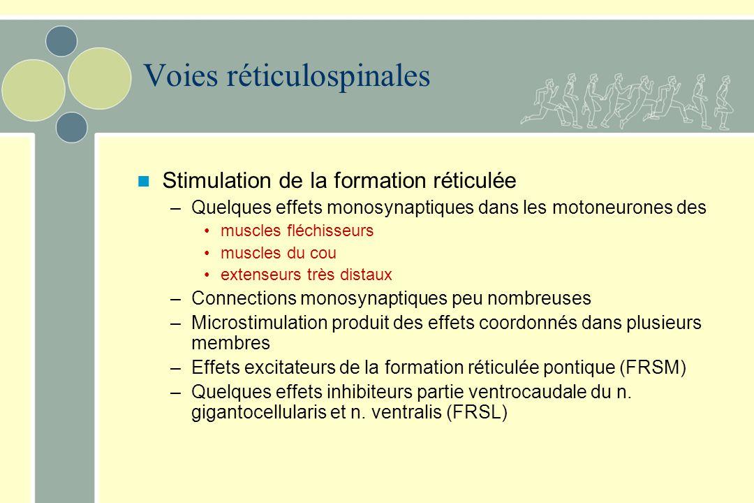 Voie réticulospinale latérale –Origine Formation réticulée bulbaire –n. reticularis gigantocellularis –n. reticularis ventralis –Trajectoire Faisceau