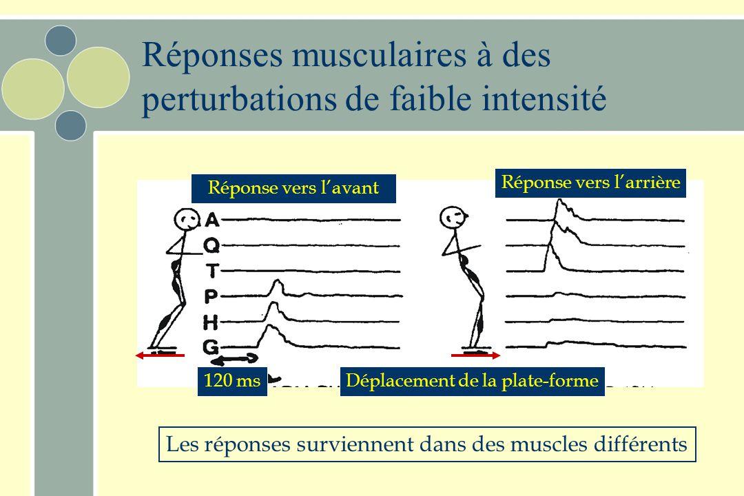 Abdominaux Grand droit Quadriceps Tibial antérieur Biceps femoris Paraspinal Jumeau ChevilleHancheGenoux