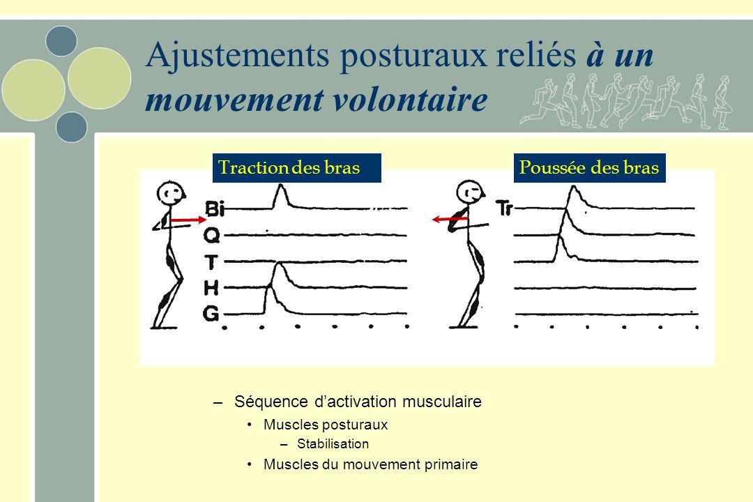 Réponses musculaires à des perturbations de faible intensité 120 ms Réponse vers l'avant Réponse vers l'arrière Les réponses surviennent dans des musc