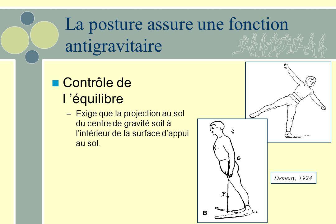 La posture Fonction antigravitaire –consiste à s'opposer à la force de la pesanteur pour construire l'assemblage des segments qui définit la posture –