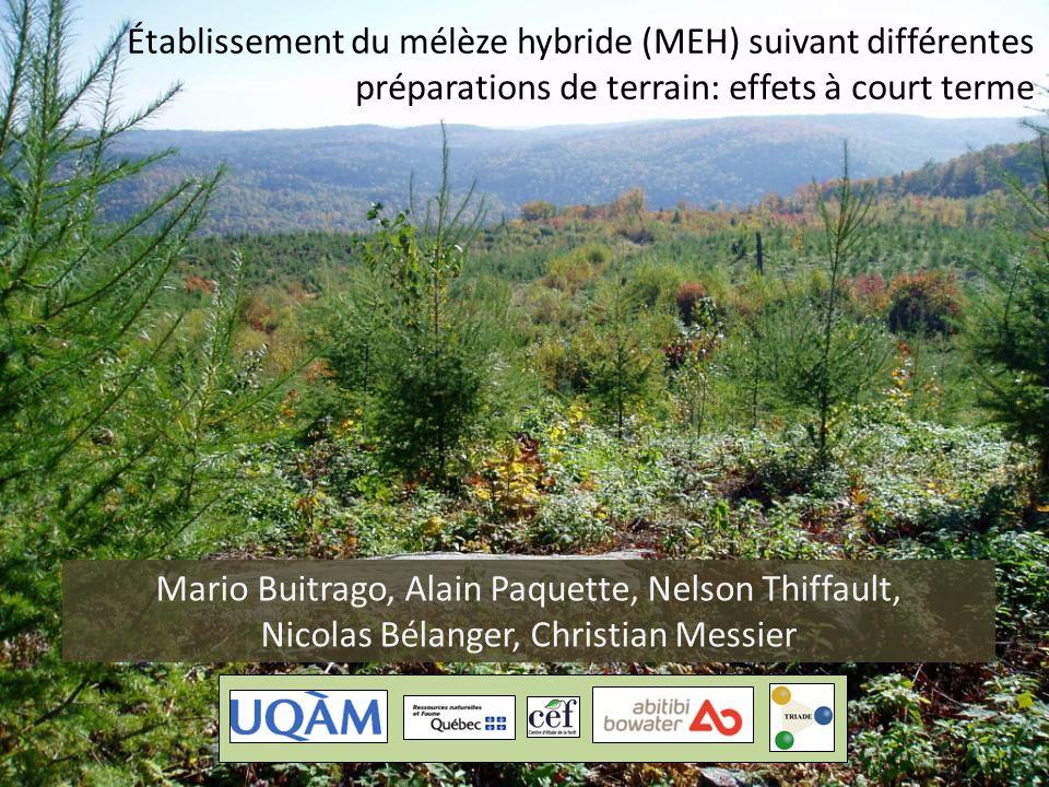 Mario Buitrago, Alain Paquette, Nelson Thiffault, Nicolas Bélanger, Christian Messier Établissement du mélèze hybride (MEH) suivant différentes prépar
