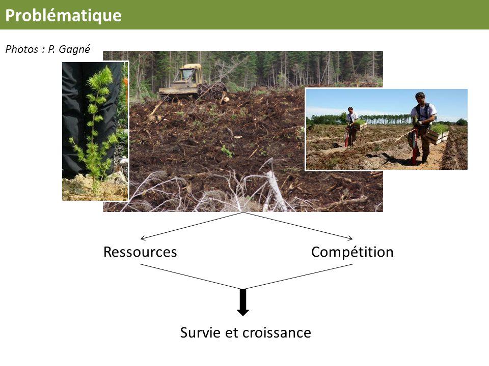 Problématique Ressources Compétition Survie et croissance Photos : P. Gagné