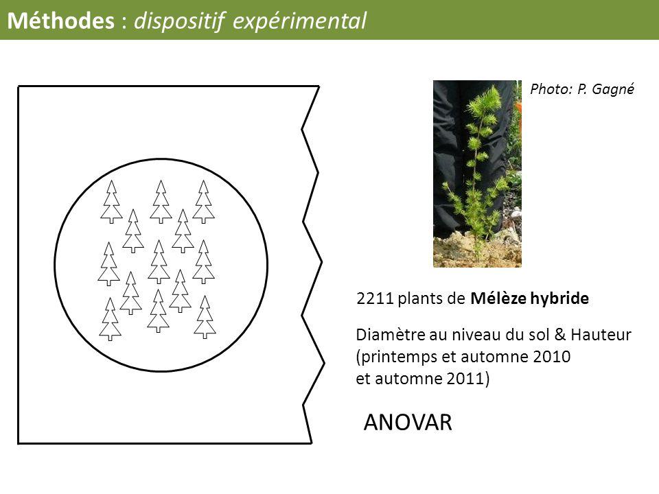 Méthodes : dispositif expérimental Diamètre au niveau du sol & Hauteur (printemps et automne 2010 et automne 2011) 2211 plants de Mélèze hybride ANOVA