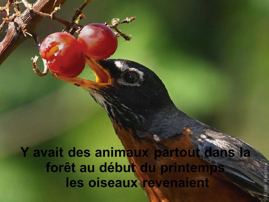 Y avait des animaux partout dans la forêt au début du printemps les oiseaux revenaient