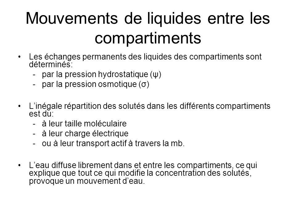Mouvements de liquides entre les compartiments Les échanges permanents des liquides des compartiments sont déterminés: -par la pression hydrostatique