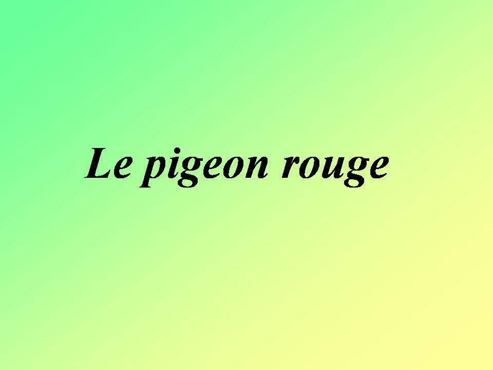 Le maire de Lille ne sait plus quoi faire avec tout les pigeons dans sa ville.