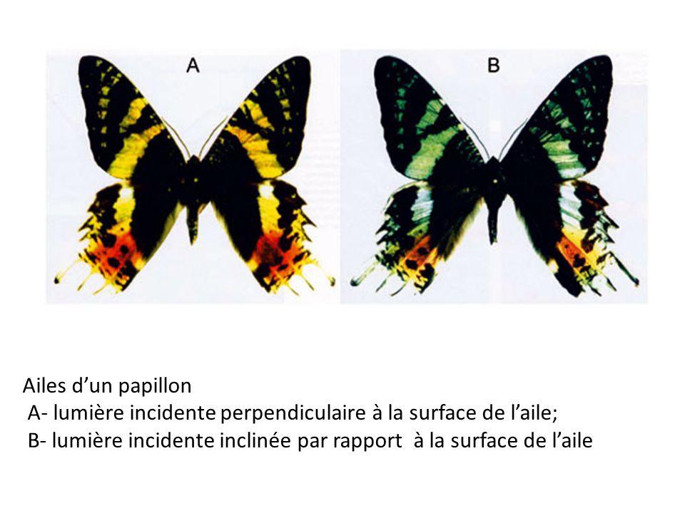 (ASTROLab of Mont-Mégantic National Park)  ondes en opposition de phase => interférences destructives