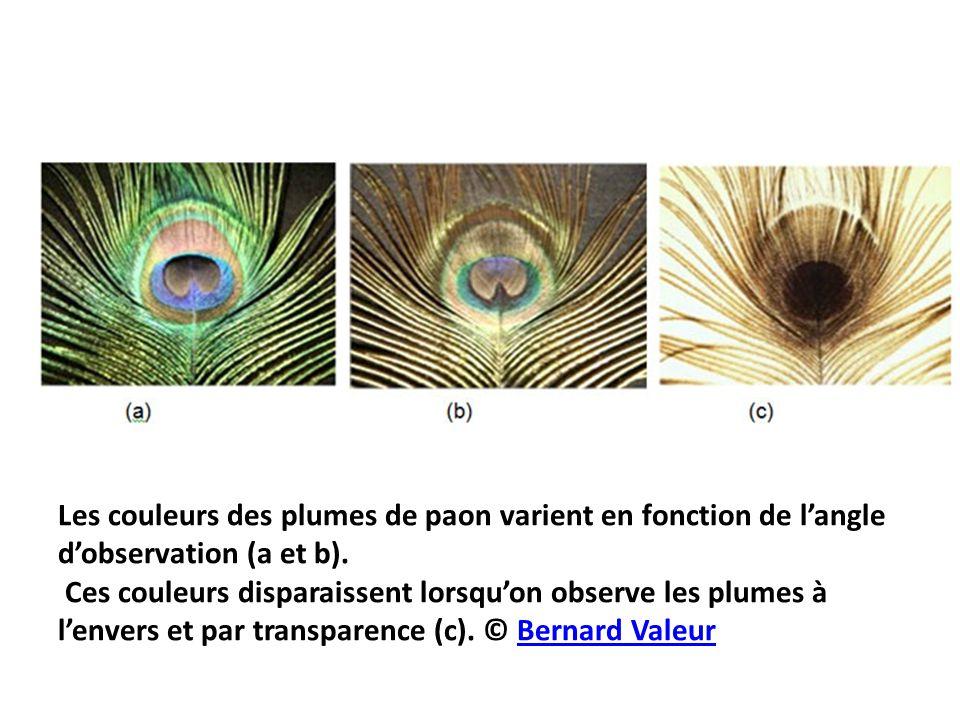 Les couleurs des plumes de paon varient en fonction de l'angle d'observation (a et b). Ces couleurs disparaissent lorsqu'on observe les plumes à l'env