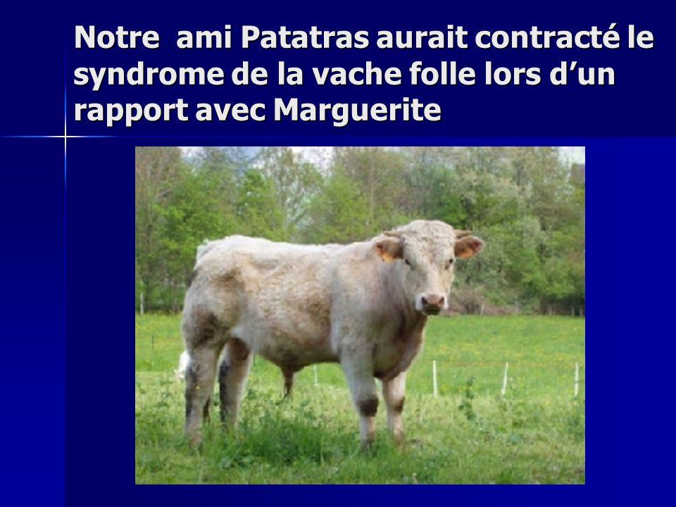 Notre ami Patatras aurait contracté le syndrome de la vache folle lors d'un rapport avec Marguerite
