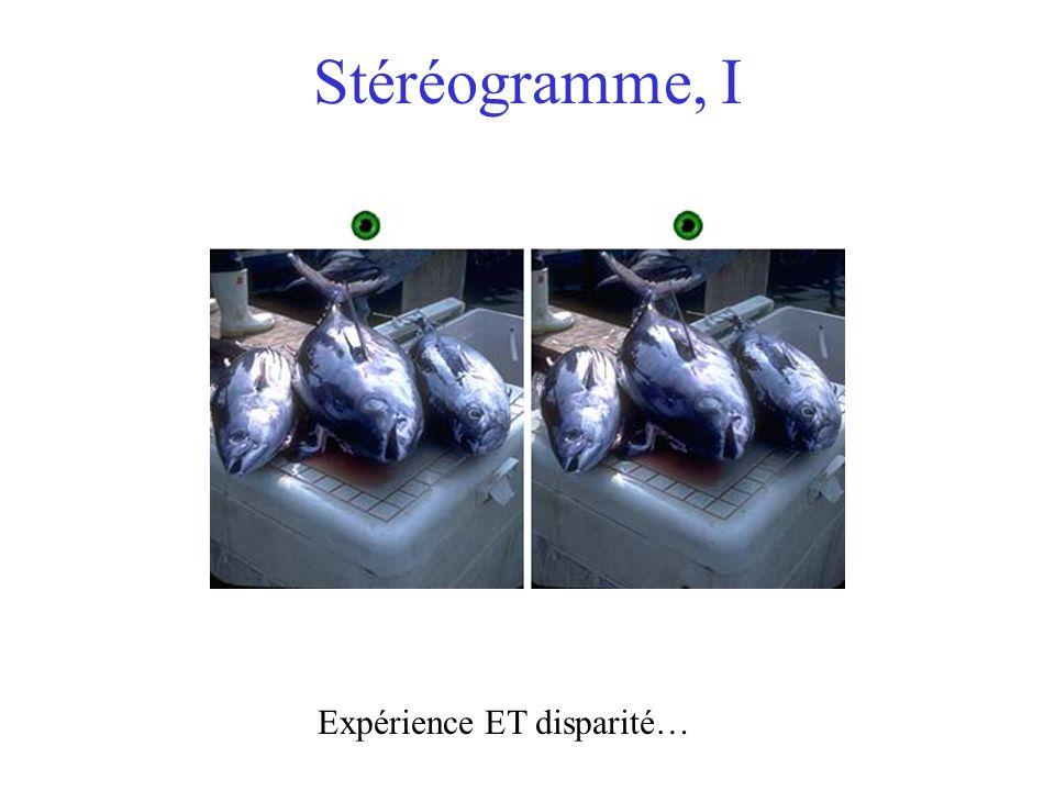 Stéréogramme, I Expérience ET disparité…