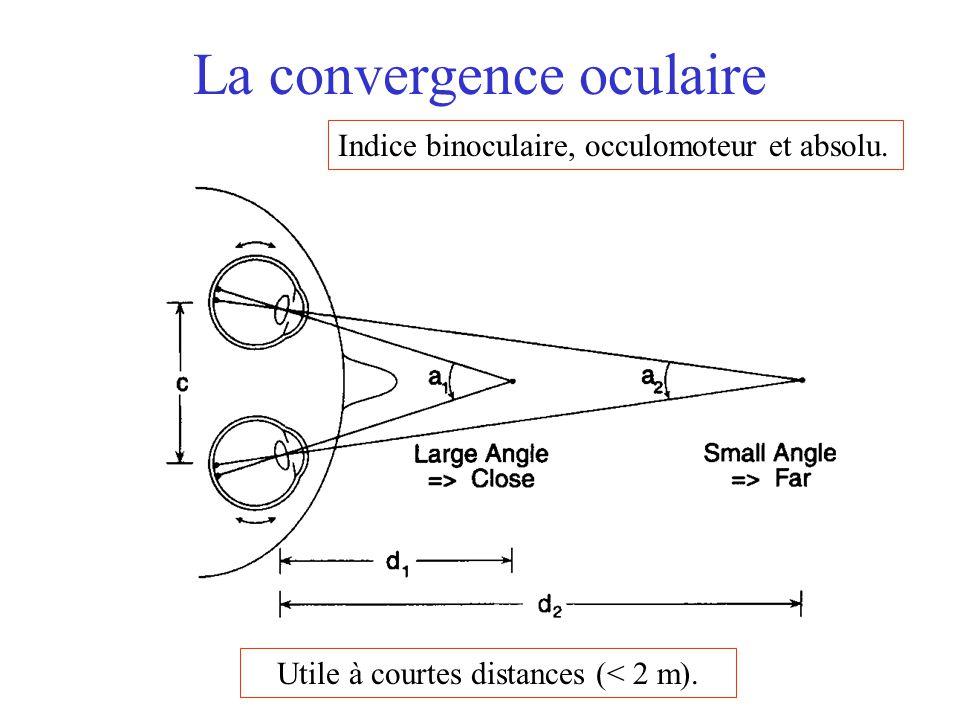 La convergence oculaire Indice binoculaire, occulomoteur et absolu. Utile à courtes distances (< 2 m).