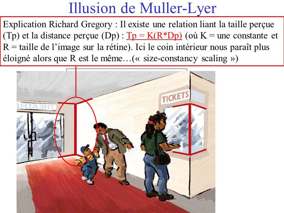 Illusion de Muller-Lyer Explication Richard Gregory : Il existe une relation liant la taille perçue (Tp) et la distance perçue (Dp) : Tp = K(R*Dp) (où