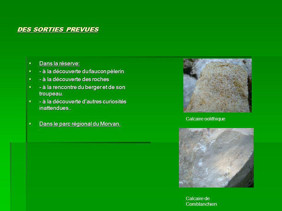 DES SORTIES PREVUES  Dans la réserve:  - à la découverte du faucon pèlerin  - à la découverte des roches  - à la rencontre du berger et de son tro
