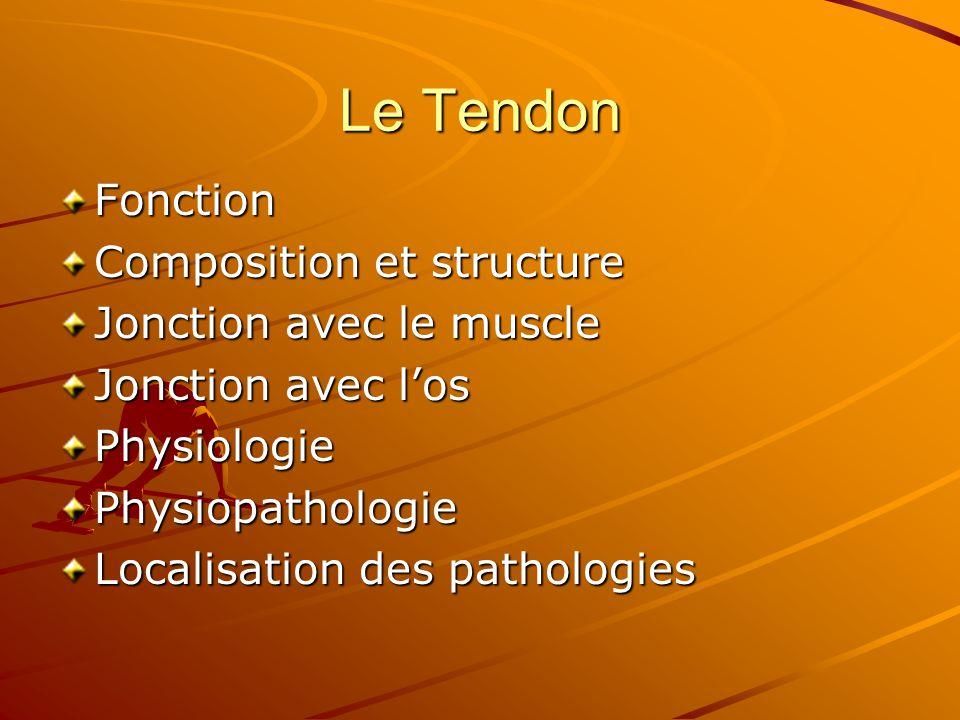 Le Tendon Fonction Composition et structure Jonction avec le muscle Jonction avec l'os PhysiologiePhysiopathologie Localisation des pathologies
