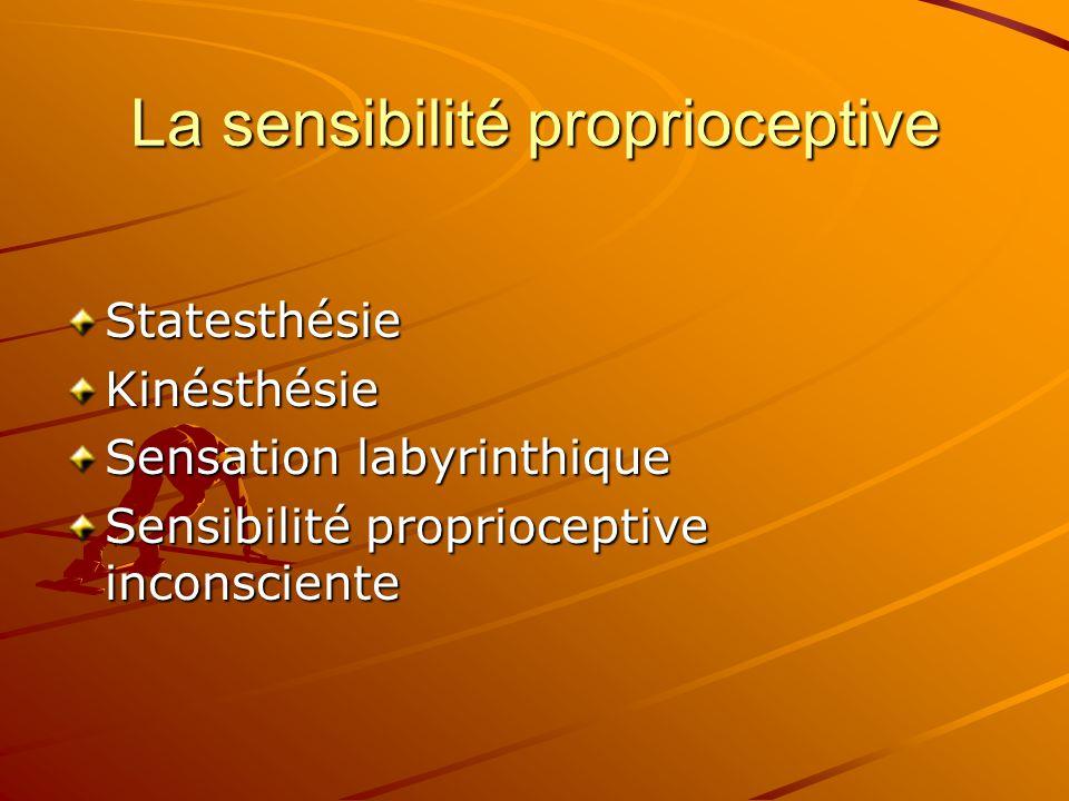 La sensibilité proprioceptive StatesthésieKinésthésie Sensation labyrinthique Sensibilité proprioceptive inconsciente