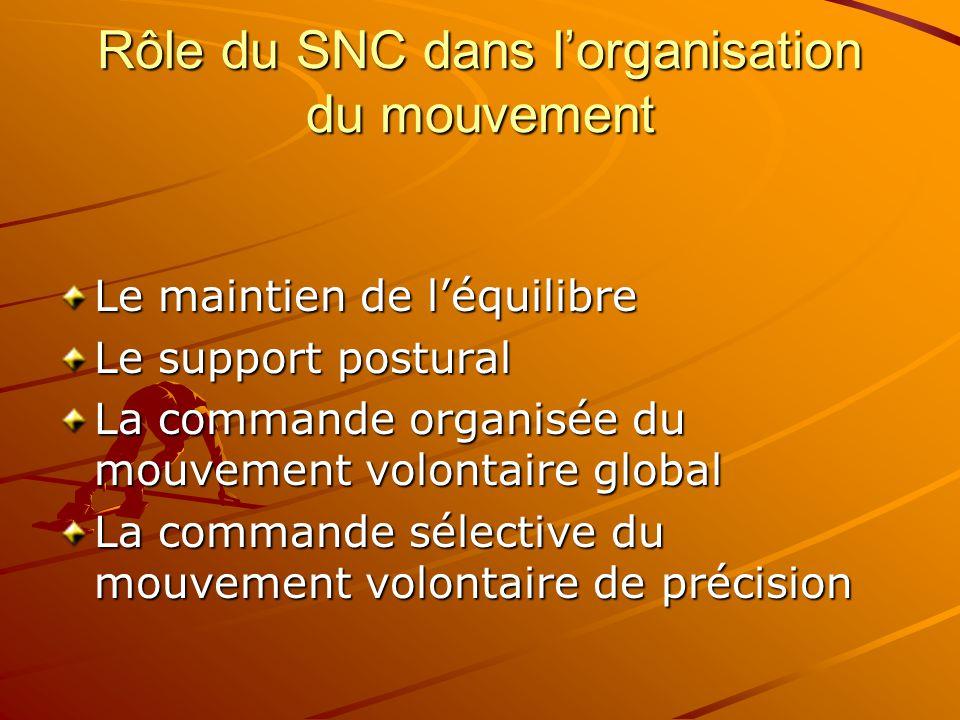 Rôle du SNC dans l'organisation du mouvement Le maintien de l'équilibre Le support postural La commande organisée du mouvement volontaire global La co