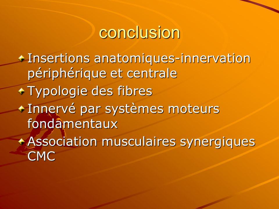 conclusion Insertions anatomiques-innervation périphérique et centrale Typologie des fibres Innervé par systèmes moteurs fondamentaux Association musc