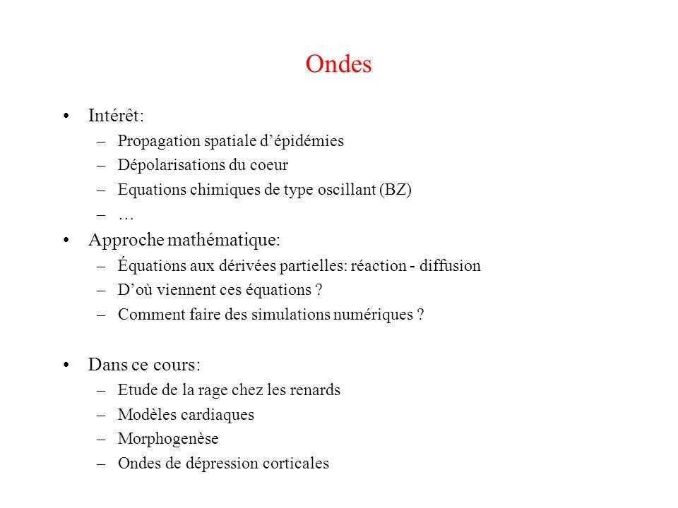 Ondes Intérêt: –Propagation spatiale d'épidémies –Dépolarisations du coeur –Equations chimiques de type oscillant (BZ) –… Approche mathématique: –Équa