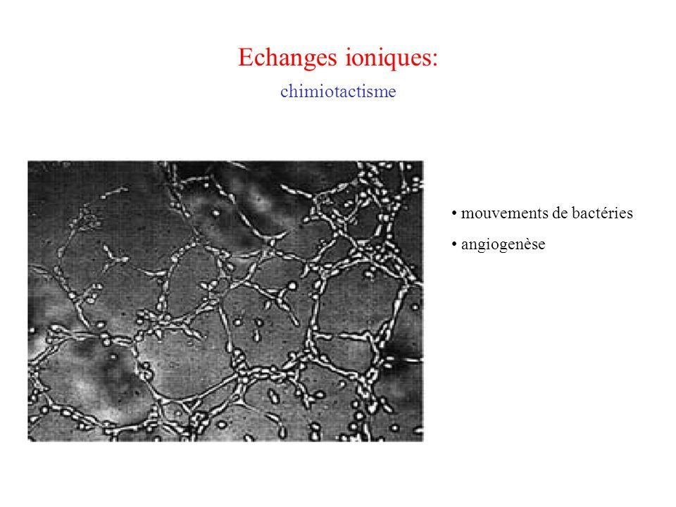 Echanges ioniques: chimiotactisme mouvements de bactéries angiogenèse