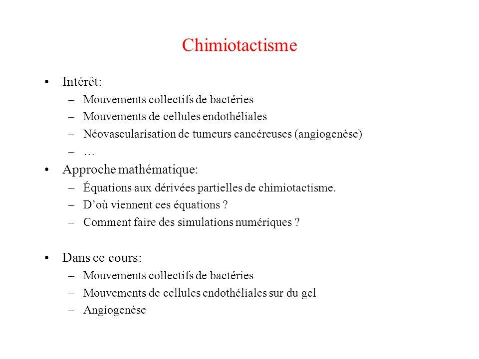 Chimiotactisme Intérêt: –Mouvements collectifs de bactéries –Mouvements de cellules endothéliales –Néovascularisation de tumeurs cancéreuses (angiogen