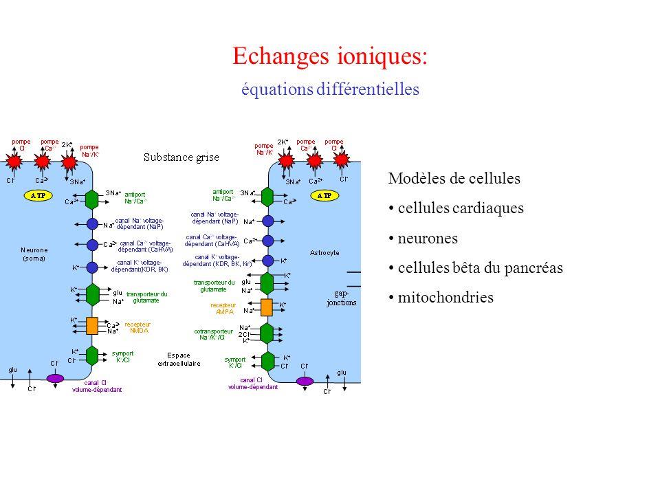 Echanges ioniques Intérêt: –Modélisation de l'activité cardiaque –Modélisation de l'activité cérébrale –Dynamique de l'insuline –… Approche mathématique: –Équations différentielles ordinaires –Problème: grand nombre d'équations –Problème: grand nombre de paramètres, souvent inconnus Dans ce cours: –Potentiels d'action (Hodgkin Huxley) –Modèles en écologie (proie / prédateurs) –Modèles d'épidémies
