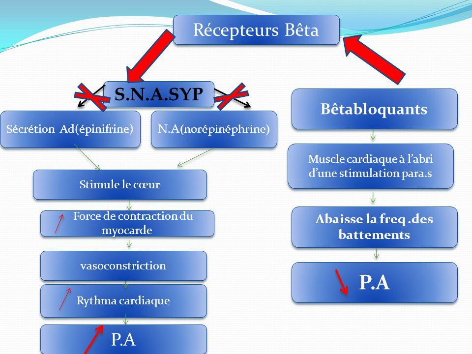 Sécrétion Ad(épinifrine) Stimule le cœur Force de contraction du myocarde Bêtabloquants P.A Rythma cardiaque N.A(norépinéphrine) S.N.A.SYP vasoconstriction Récepteurs Bêta Muscle cardiaque à l'abri d'une stimulation para.s Abaisse la freq.des battements P.A