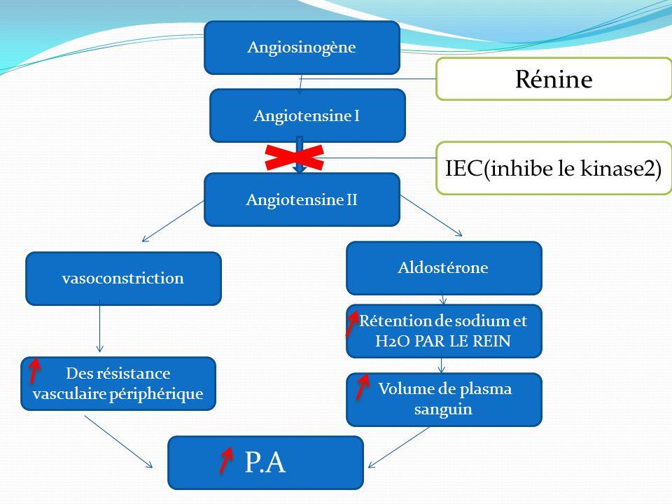 Angiosinogène Angiotensine II vasoconstriction Aldostérone Rétention de sodium et H2O PAR LE REIN Volume de plasma sanguin Des résistance vasculaire périphérique P.A Angiotensine I IEC(inhibe le kinase2) Rénine
