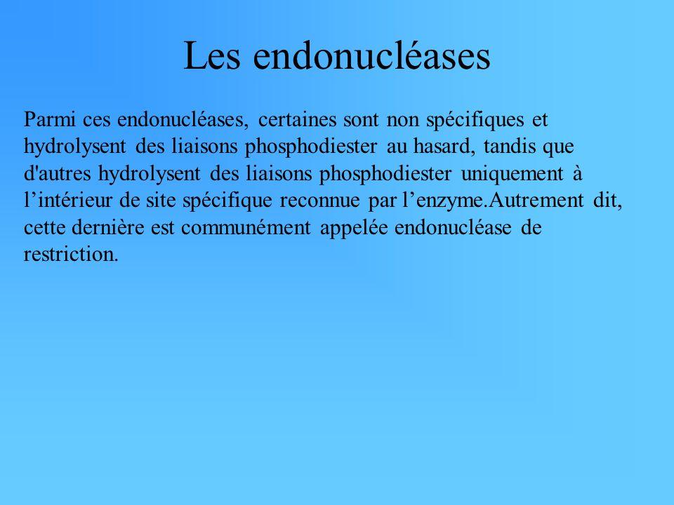 Les endonucléases Parmi ces endonucléases, certaines sont non spécifiques et hydrolysent des liaisons phosphodiester au hasard, tandis que d'autres hy