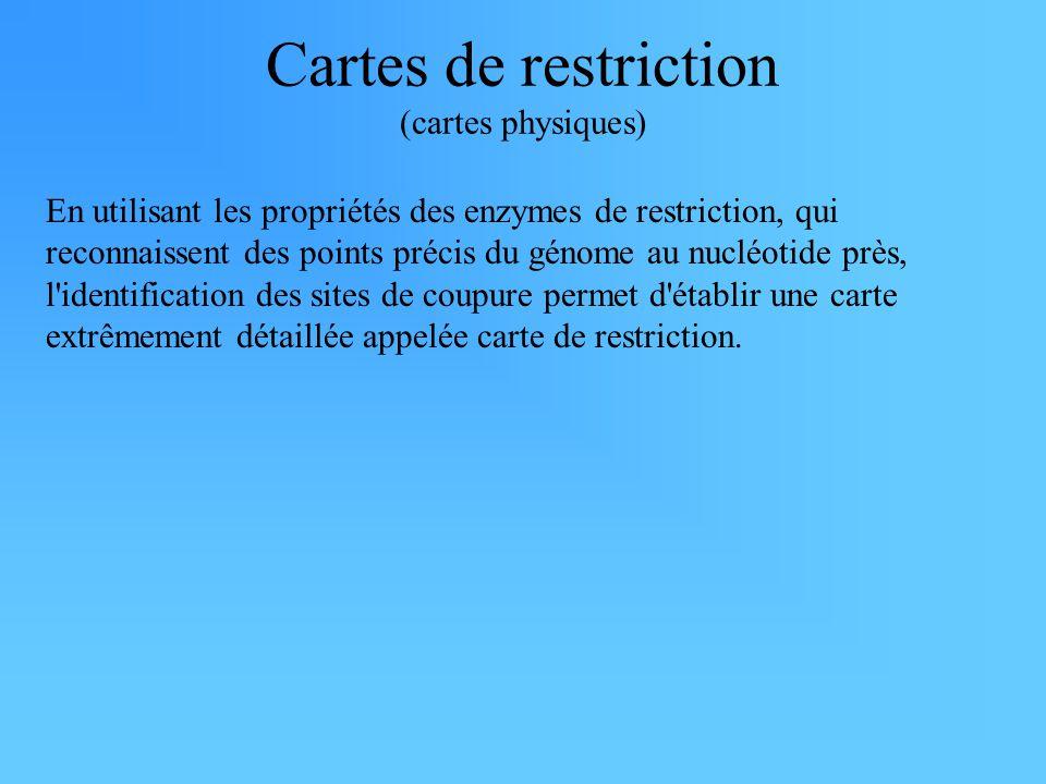 Cartes de restriction (cartes physiques) En utilisant les propriétés des enzymes de restriction, qui reconnaissent des points précis du génome au nucléotide près, l identification des sites de coupure permet d établir une carte extrêmement détaillée appelée carte de restriction.