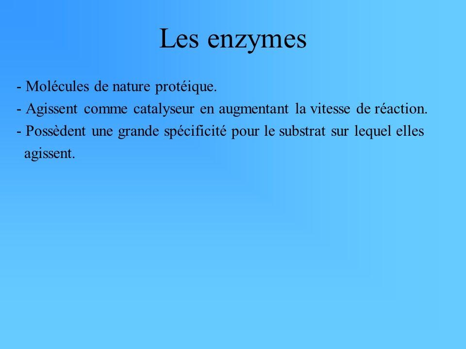 Les enzymes - Molécules de nature protéique. - Agissent comme catalyseur en augmentant la vitesse de réaction. - Possèdent une grande spécificité pour