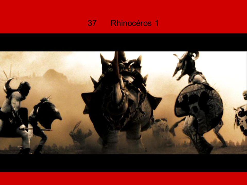 37 Rhinocéros 1
