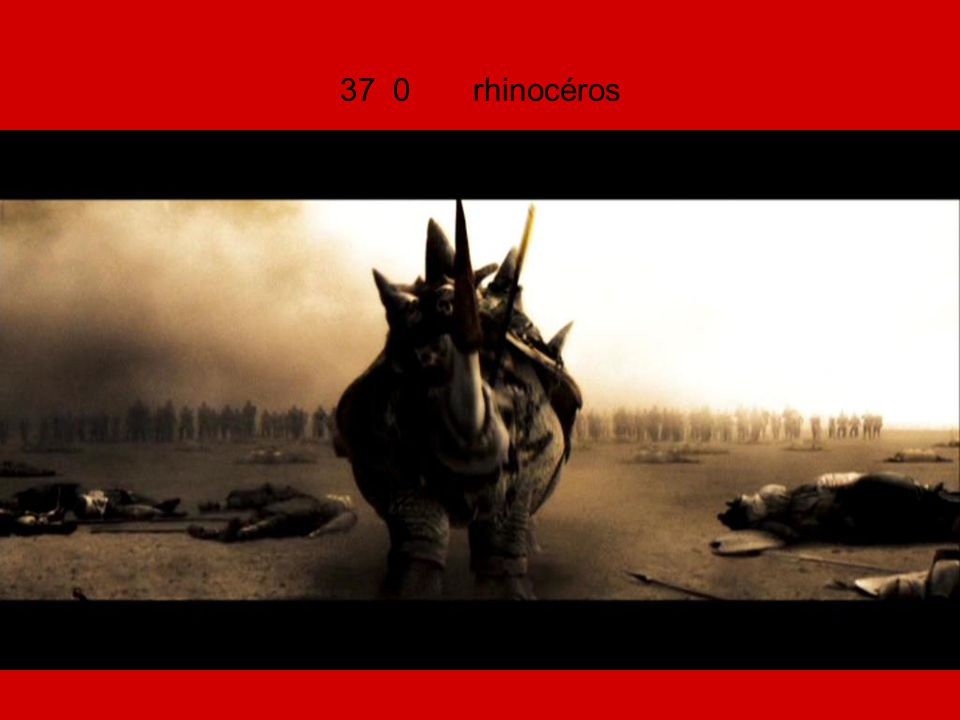 37 0 rhinocéros