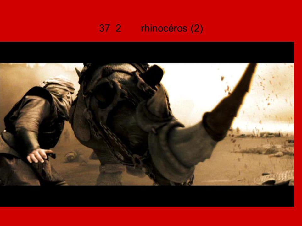 37 2 rhinocéros (2)