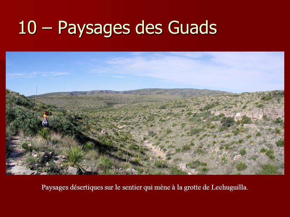 10 – Paysages des Guads Paysages désertiques sur le sentier qui mène à la grotte de Lechuguilla.