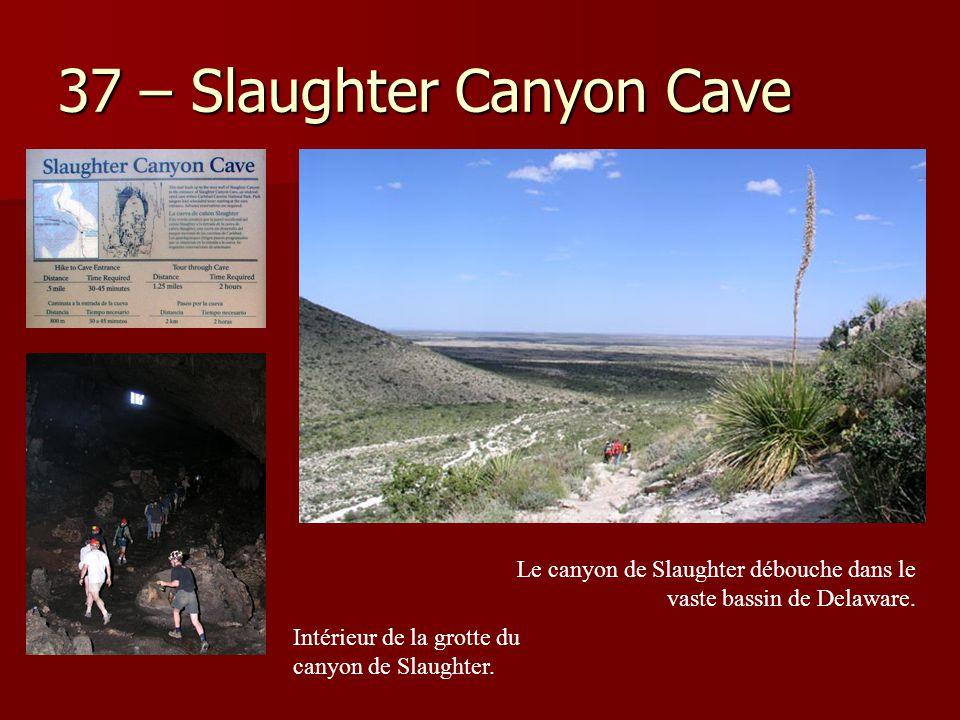 37 – Slaughter Canyon Cave Le canyon de Slaughter débouche dans le vaste bassin de Delaware. Intérieur de la grotte du canyon de Slaughter.
