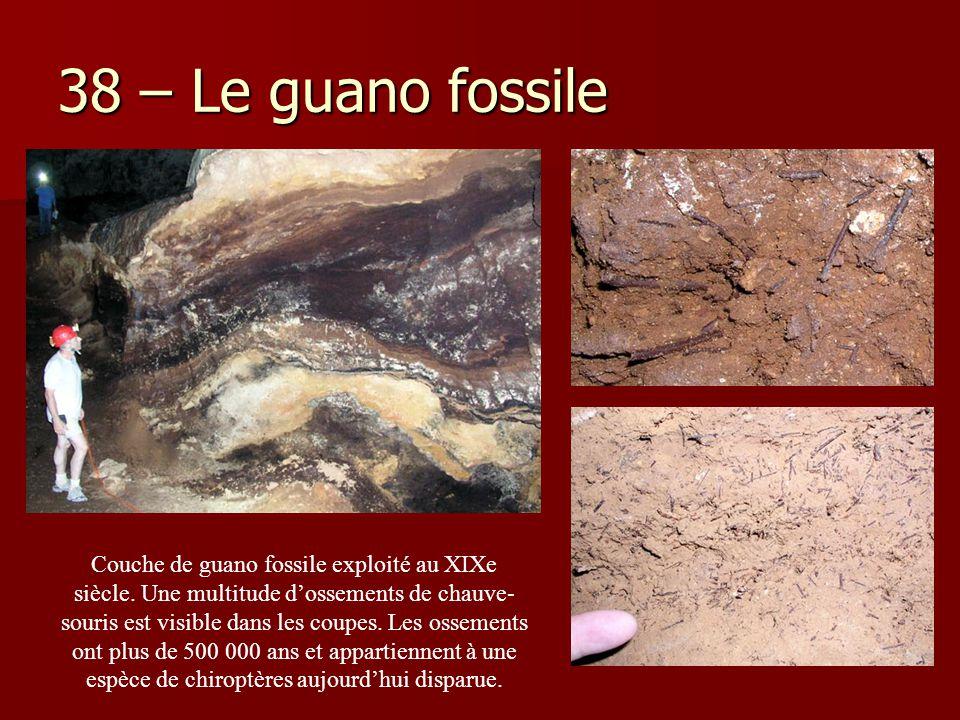 38 – Le guano fossile Couche de guano fossile exploité au XIXe siècle. Une multitude d'ossements de chauve- souris est visible dans les coupes. Les os