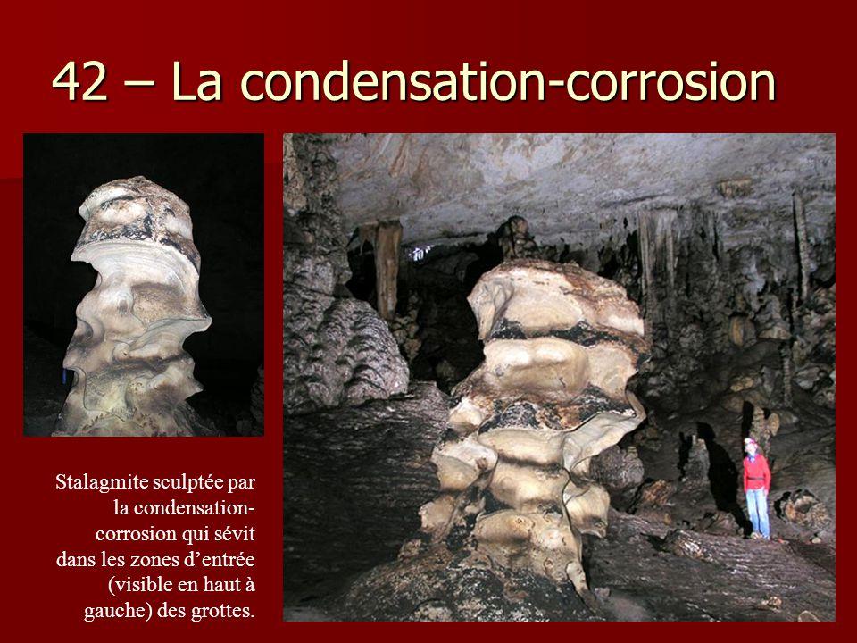 42 – La condensation-corrosion Stalagmite sculptée par la condensation- corrosion qui sévit dans les zones d'entrée (visible en haut à gauche) des gro