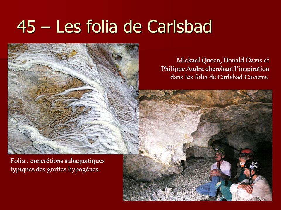 45 – Les folia de Carlsbad Folia : concrétions subaquatiques typiques des grottes hypogènes. Mickael Queen, Donald Davis et Philippe Audra cherchant l