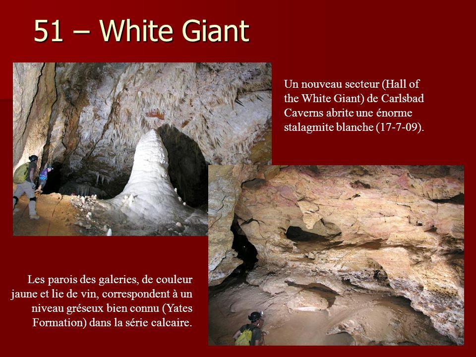 (?-9-2007) Un nouveau secteur (Hall of the White Giant) de Carlsbad Caverns abrite une énorme stalagmite blanche (17-7-09). Les parois des galeries, d