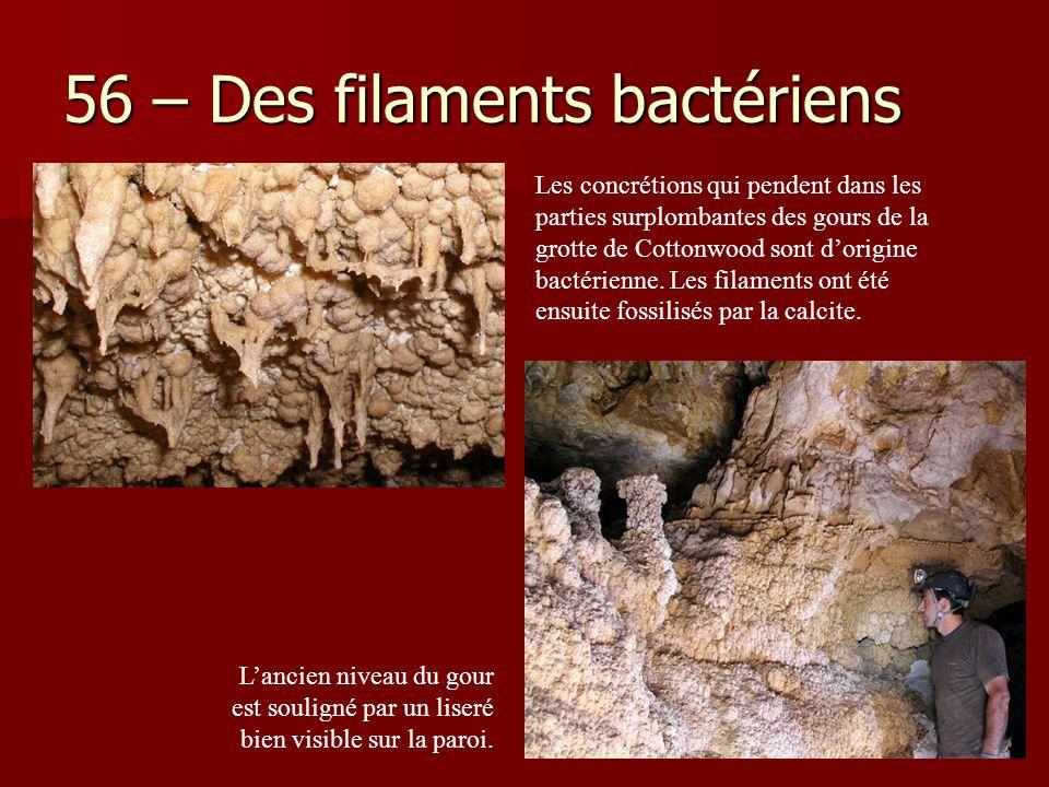 56 – Des filaments bactériens L'ancien niveau du gour est souligné par un liseré bien visible sur la paroi. Les concrétions qui pendent dans les parti