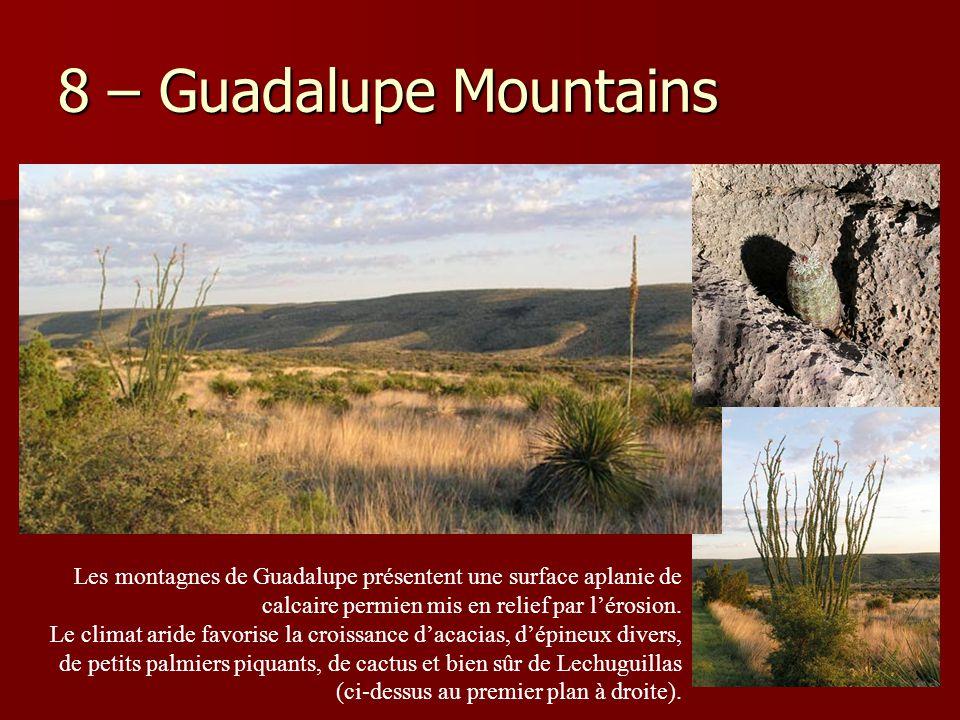 8 – Guadalupe Mountains Les montagnes de Guadalupe présentent une surface aplanie de calcaire permien mis en relief par l'érosion. Le climat aride fav