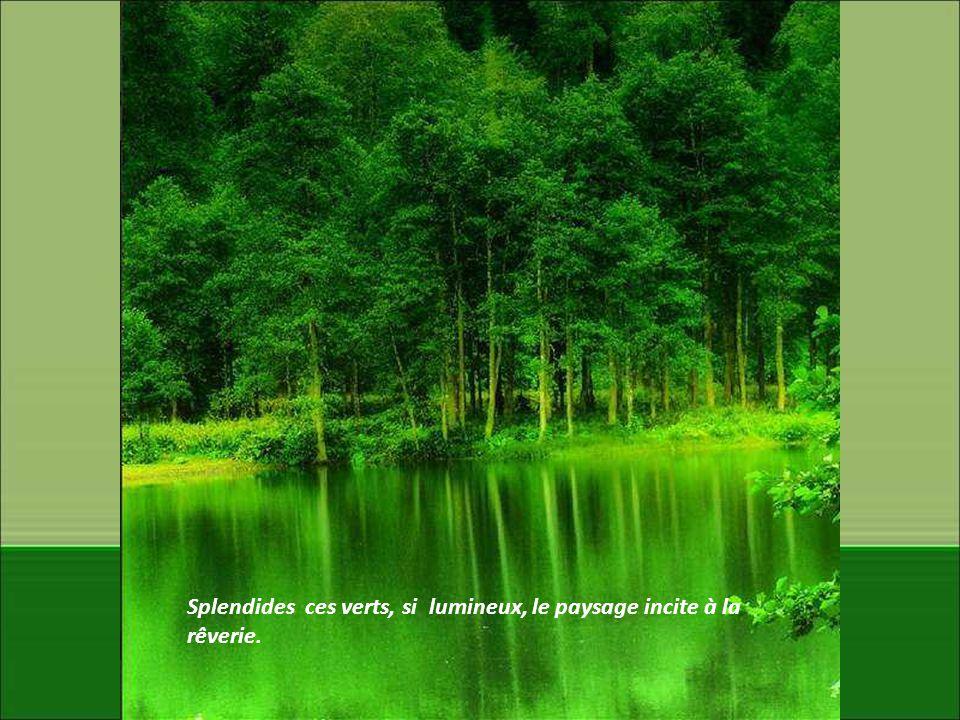 Splendides ces verts, si lumineux, le paysage incite à la rêverie.
