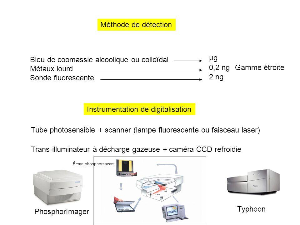 Méthode de détection Bleu de coomassie alcoolique ou colloïdal Métaux lourd Sonde fluorescente µg 0,2 ng 2 ng Gamme étroite Instrumentation de digital