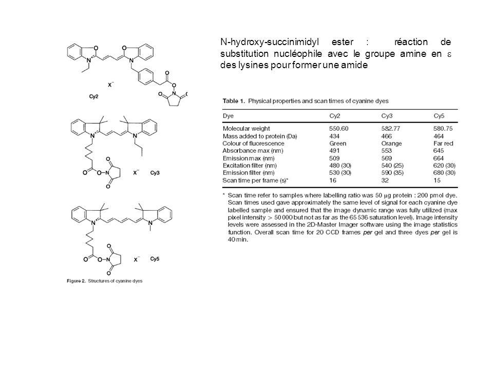 N-hydroxy-succinimidyl ester : réaction de substitution nucléophile avec le groupe amine en  des lysines pour former une amide