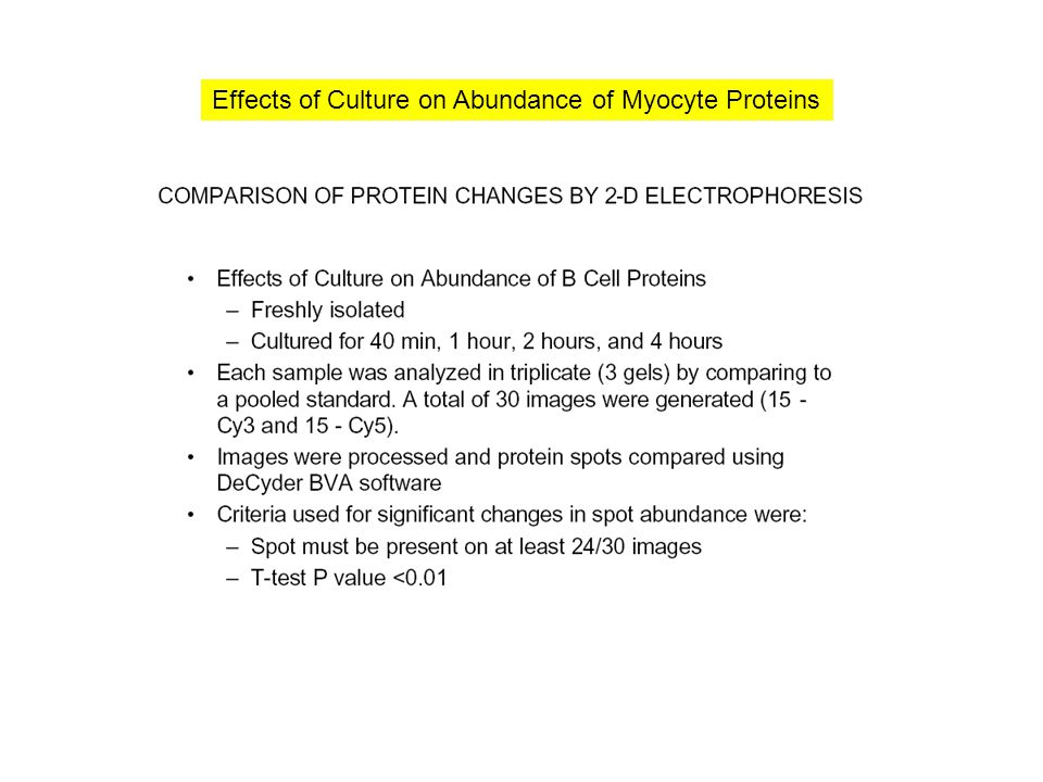 Effects of Culture on Abundance of Myocyte Proteins